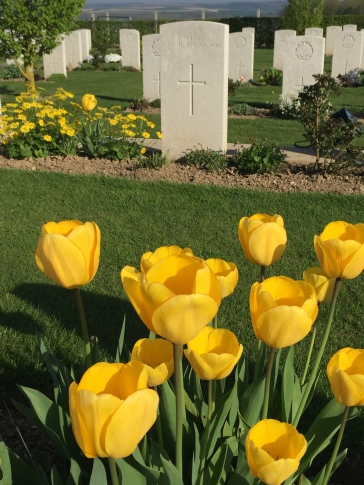 Tulips at the Australian National Memorial (pic by Paul)